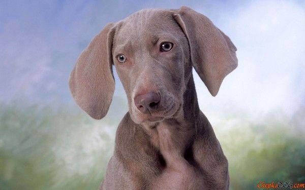 chepkadog.com-379